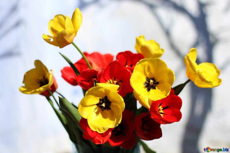 Spring Festival №27425