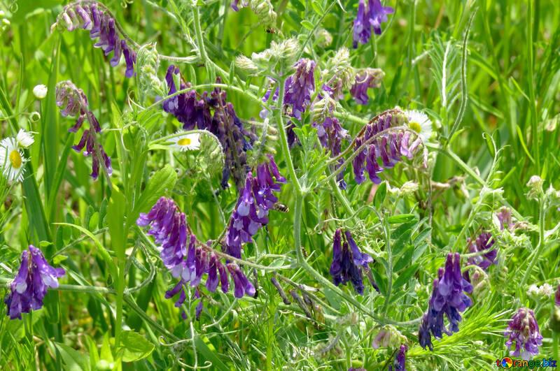 Beautiful wild flowers №27032