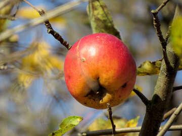 Natural apple №28783