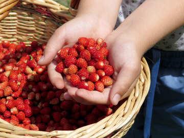 Strawberry season №28985