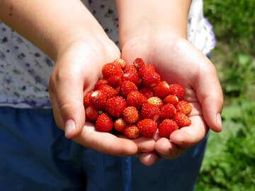 Strawberries in children`s hands №28988