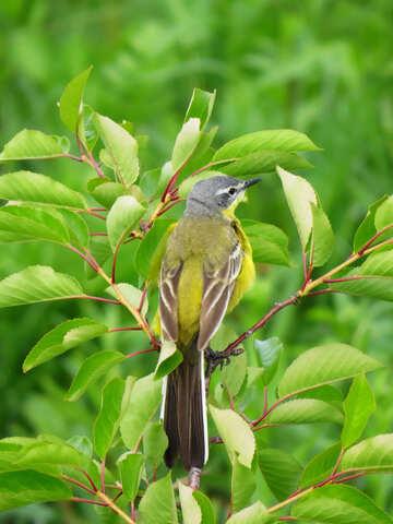 Bright bird №28272
