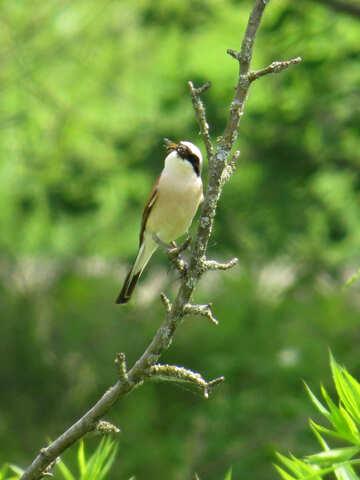 Wild bird №28177