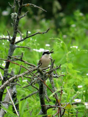 Wild bird food №28172