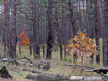 Woodland scenery №28332