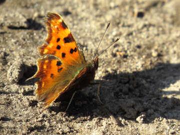Beautiful butterfly №28741