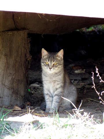 Cat  №28691
