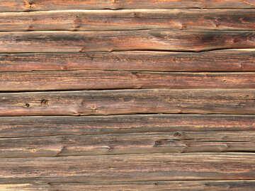 Textura del árbol hermoso №28674