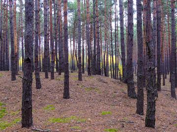 Walk in the woods №28316