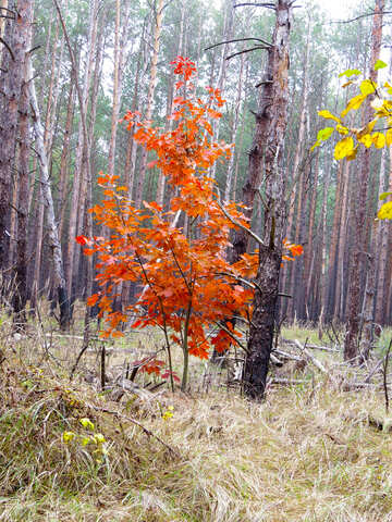 Bright tree in the forest №28328