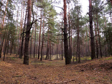 Grey Forest №28294