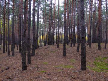 Forest freshness №28315