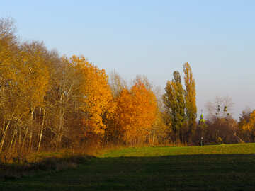 Gold autumn №28484