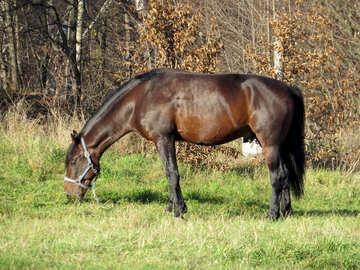 Home horse №28573