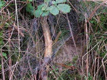 Forest net №28326