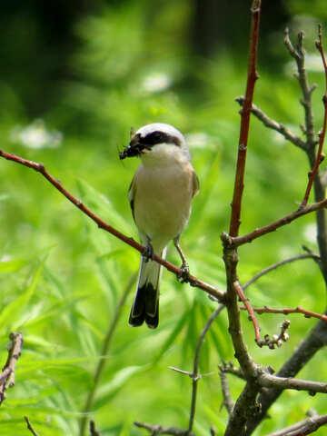 Bird kills pests №28167