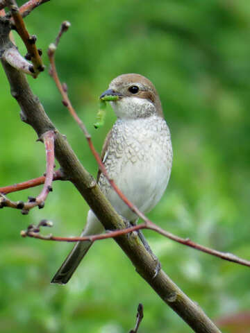 Bird kills pests №28191
