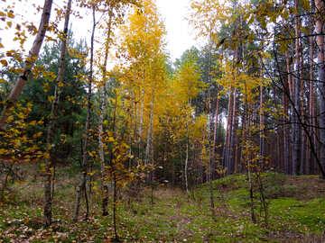 Autumn forest №28305