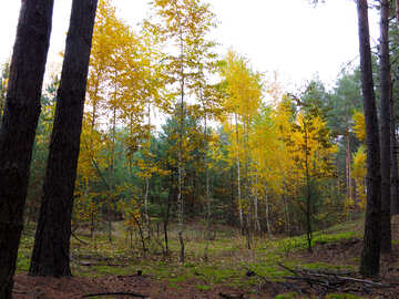Paints of autumn forest №28309