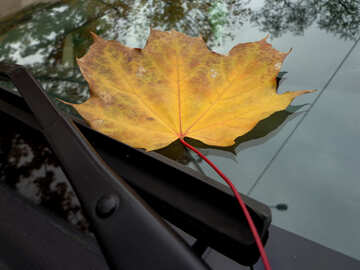 Autumn leaf on the glass of the car №28378