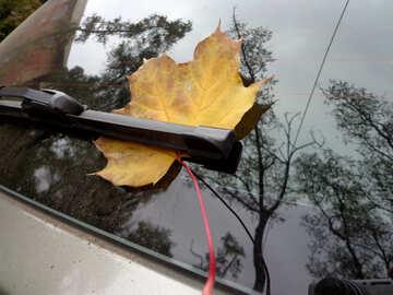 Fallen leaf №28379