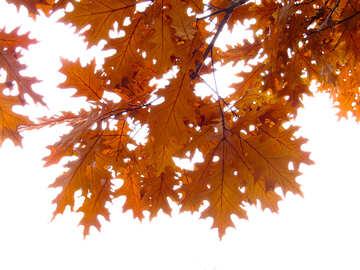 Autumn background №28338