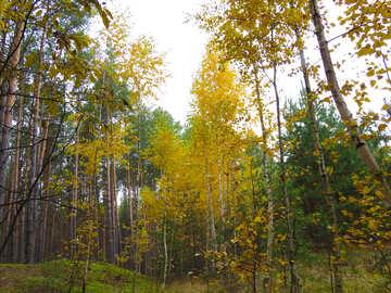 Autumn deciduous forest №28306