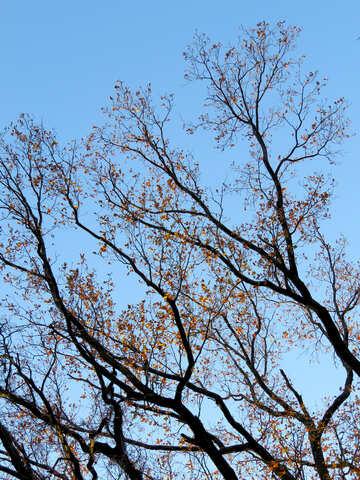 Autumn trees №28480