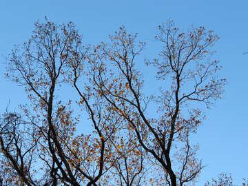 The last leaf on the tree №28479