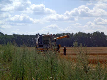 Harvester sammelt das Korn №28286