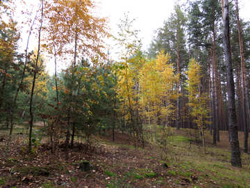 Autumn Nature №28307