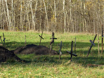 Forgotten cemetery №28571