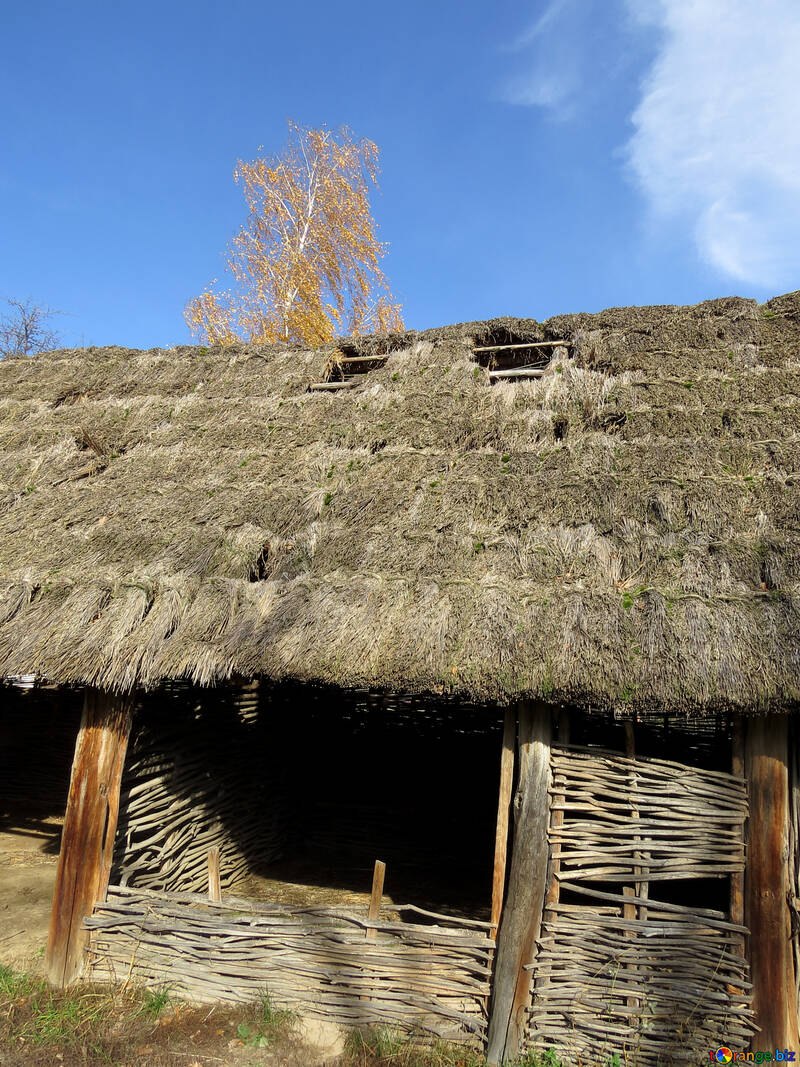 Old roof of reeds №28912