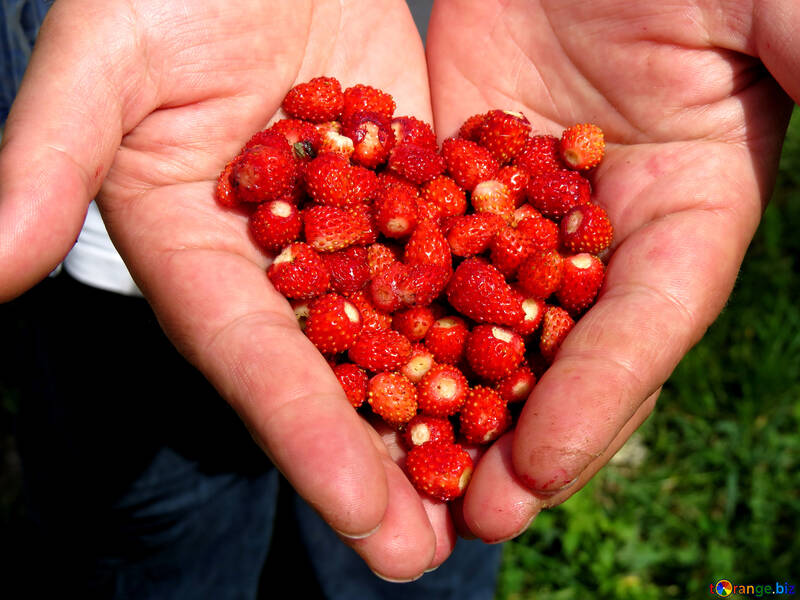Herzen von Erdbeeren №28983