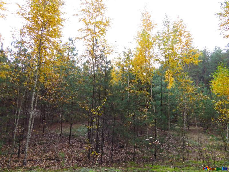 Bosque del otoño brillante №28299