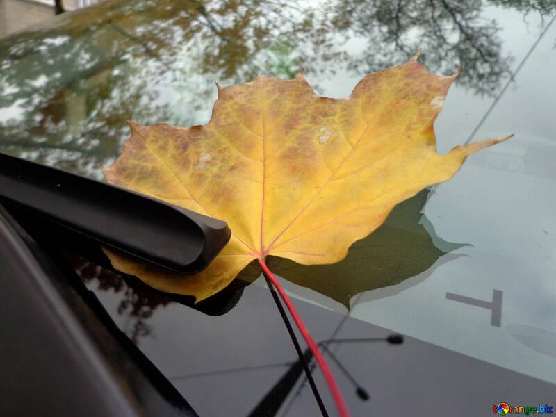 Herbst Blatt auf Glas №28377