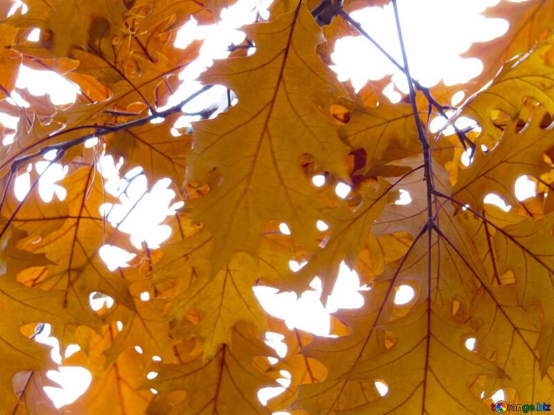 Autumn leaves №28337