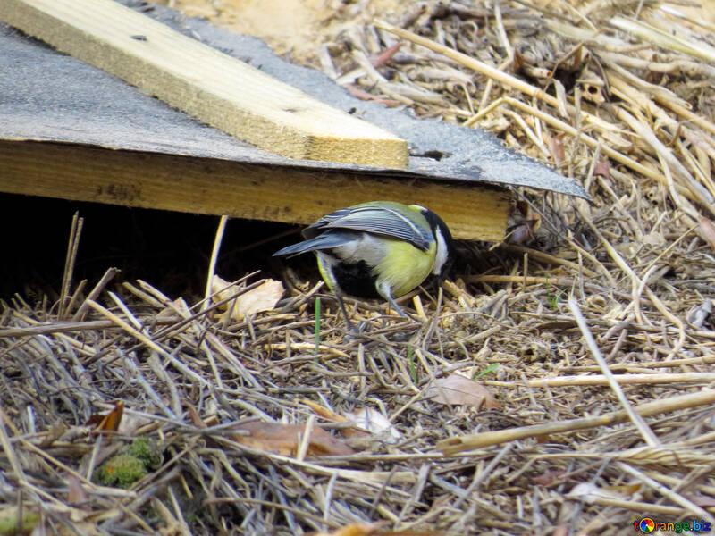 Pájaro en el tejado №28714