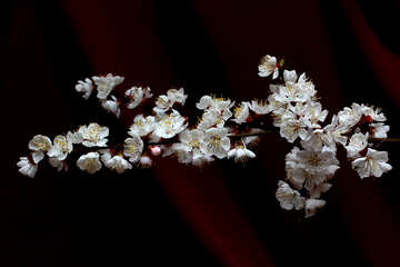Blooming tree on dark background №29879
