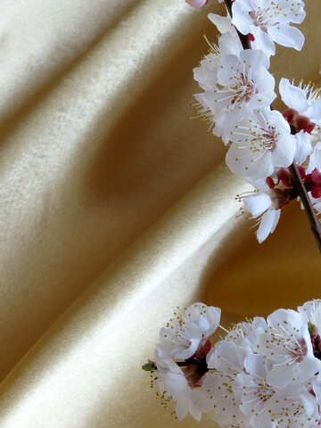 Golden background with blossoming branch №29928