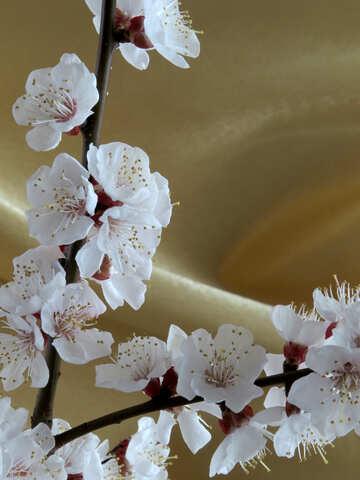Golden background with flower №29935