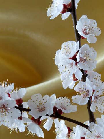 Fondo dorado con rama floreciente №29936