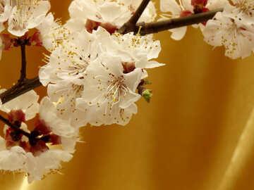 Spring background №29948