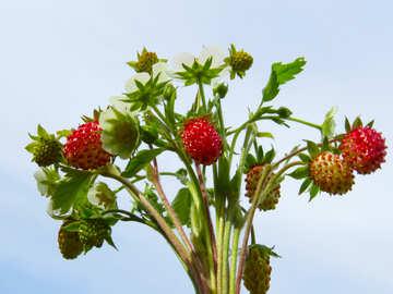 Strawberry №29473