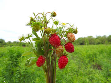 Strawberry bouquet №29511