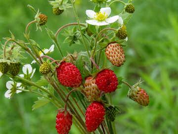 Strawberries №29501