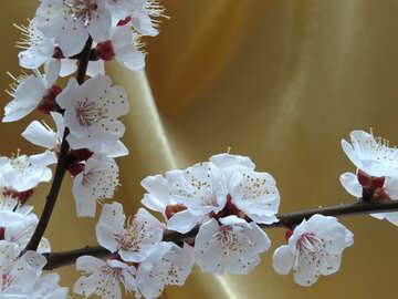 Flowering branch №29933