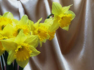 Bouquet of daffodils on the background fabric №29941