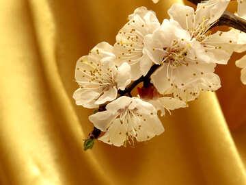 Macro flower on cloth background №29945