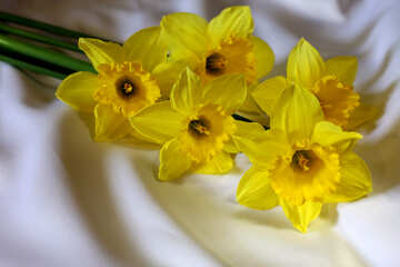 Daffodils on the bed №29986